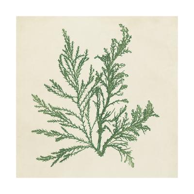 Chromatic Seaweed I-Vision Studio-Art Print