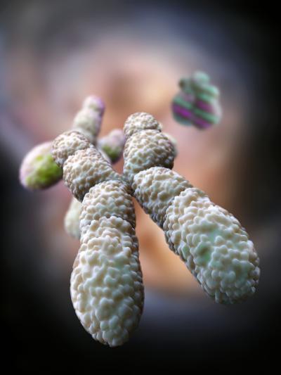 Chromosome, Artwork-Ramon Andrade-Photographic Print