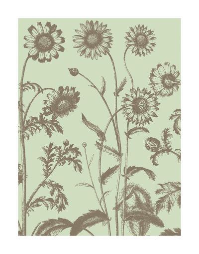 Chrysanthemum 11-Botanical Series-Art Print