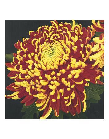 https://imgc.artprintimages.com/img/print/chrysanthemum-1_u-l-f8cd9s0.jpg?p=0
