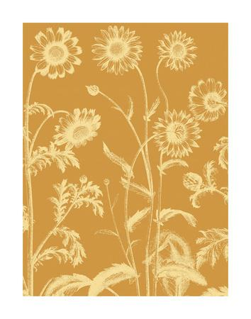 https://imgc.artprintimages.com/img/print/chrysanthemum-20_u-l-f8cds80.jpg?p=0