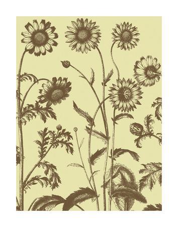 https://imgc.artprintimages.com/img/print/chrysanthemum-4_u-l-f8cdwj0.jpg?p=0