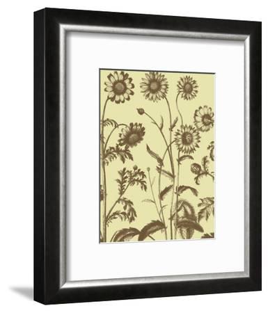 Chrysanthemum 4-Botanical Series-Framed Art Print