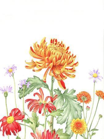 https://imgc.artprintimages.com/img/print/chrysanthemum-card_u-l-f994h50.jpg?p=0
