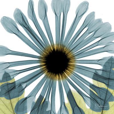 https://imgc.artprintimages.com/img/print/chrysanthemum-h68_u-l-pyjxl40.jpg?p=0