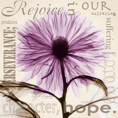 Chrysanthemum Hope-Albert Koetsier-Premium Giclee Print
