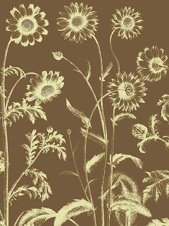 https://imgc.artprintimages.com/img/print/chrysanthemum-no-3_u-l-f54byu0.jpg?p=0
