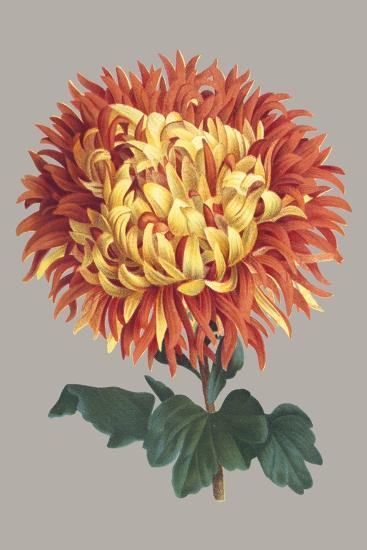 Chrysanthemum on Gray I-Vision Studio-Art Print