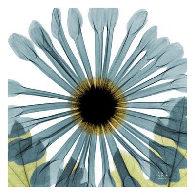 https://imgc.artprintimages.com/img/print/chrysanthemum_u-l-f6fyg30.jpg?p=0