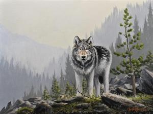 A Wild Domain by Chuck Black