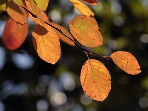Fall Foliage by Chuck Burton