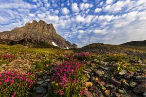 Alpine Wildflowers in the Hanging Gardens of Logan Pass in Glacier National Park, Montana, Usa by Chuck Haney