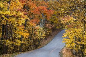 Autumn Color at Brown County State Park, Indiana, USA by Chuck Haney