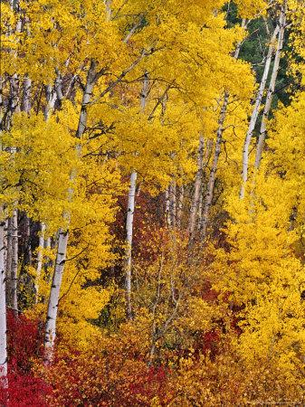 Autumn Color in the Flathead Valley, Montana, USA