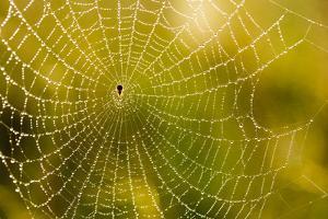 Backlit Spider Web in Theodore Roosevelt National Park, North Dakota, Usa by Chuck Haney