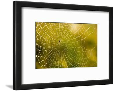 Backlit Spider Web in Theodore Roosevelt National Park, North Dakota, Usa