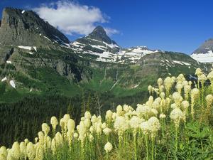 Beargrass Near Logan Pass in Gacier National Park, Montana, Usa by Chuck Haney