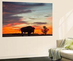 Bison Bull Silhouette, Theodore Roosevelt NP, North Dakota, USA by Chuck Haney