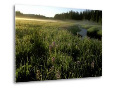 Early Morning Fog on Packer Meadows, Montana, USA