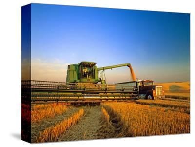 Farmer Unloading Wheat from Combine Near Colfax, Washington, USA