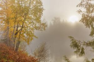 Foggy Sunrise over the Slocan River in Autumn Near Winlaw, British Columbia, Canada by Chuck Haney