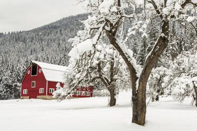 Fresh Snow on Red Barn Near Salmo, British Columbia, Canada by Chuck Haney