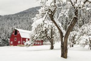 Fresh Snow on Red Barn Near Salmo, British Columbia, Canada by Chuck Haney