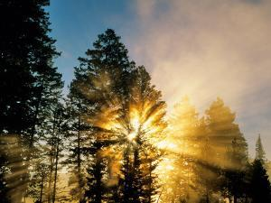 God Rays from Morning Fog Along the Madison River, Yellowstone National Park, Wyoming, USA by Chuck Haney