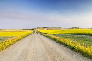Gravel Road to West Rainy Butte, Canola Near New England, North Dakota, USA by Chuck Haney
