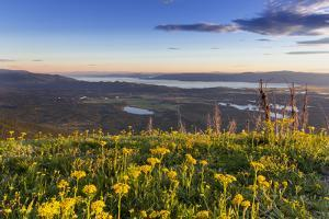 Groundsel, Swan Range Looking Down onto Flathead Lake, Montana by Chuck Haney