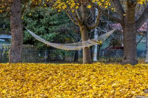 Hammock Looking Inviting in a Leaf Strewn Yard in Whitefish, Montana by Chuck Haney