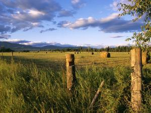Hay Bales in Field, Whitefish, Montana, USA by Chuck Haney