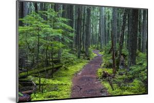 Hiking Path Winds Through Mossy Rainforest in Glacier National Park, Montana, USA by Chuck Haney