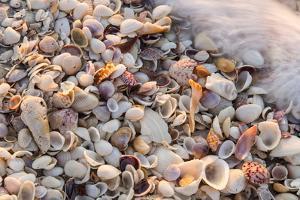 Incoming Surf and Seashells on Sanibel Island, Florida, USA by Chuck Haney