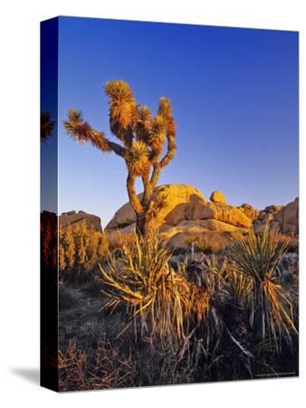 Jumbo rocks at Joshua Tree National Park, California, USA