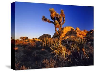 Jumbo Rocks at Joshua Tree National Park in California, USA