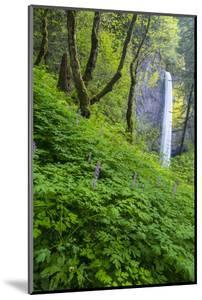 Lautorell Falls in the Columbia Gorge, Oregon, USA by Chuck Haney