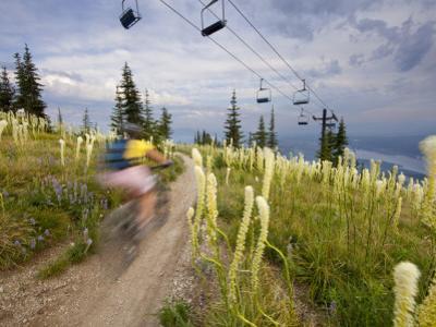 Mountain Biker Through the Beargrass on the Summit Trail, Whitefish Mountain Resort, Montana, USA