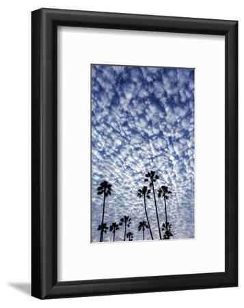 Palm Trees Silhouetted Against Puffy Clouds in San Diego, California