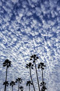 Palm Trees Silhouetted Against Puffy Clouds in San Diego, California by Chuck Haney