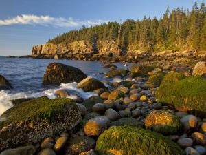 Polished Rocks at Otter Cliffs, Acadia National Park, Maine, USA by Chuck Haney