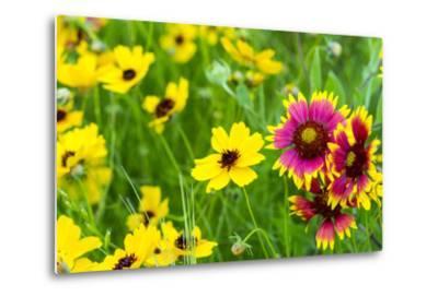 Prairie Wildflowers in Hill Country Near Johnson City, Texas, Usa