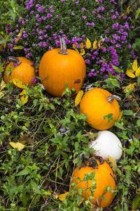 Pumpkin Display at the Historic Story Inn, Autumn, Story, Indiana, USA by Chuck Haney