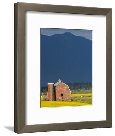 Red Barn with a Blooming Field of Canola in the Flathead Valley, Montana, Usa