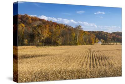 Ripe Cornfield and Barn in Brown County, Indiana, USA
