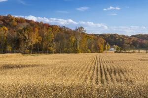 Ripe Cornfield and Barn in Brown County, Indiana, USA by Chuck Haney