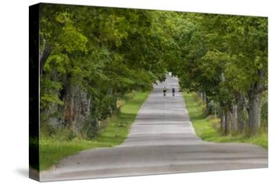 Road Bicycling under a Tunnel of Trees on Rural Road Near Glen Arbor, Michigan, Usa