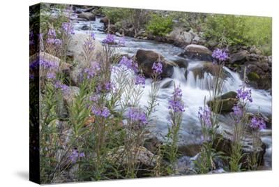 Rock Creek, Pioneer Mountains, Beaverhead-Deer Lodge National Forest, Montana, USA