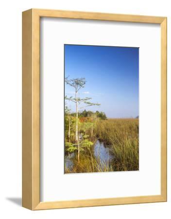 Sawgrass Highlighted in Light, Everglades National Park, Florida, USA