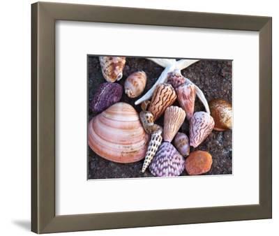 Seashells Along the Gulf of California, Loresto, Mexico